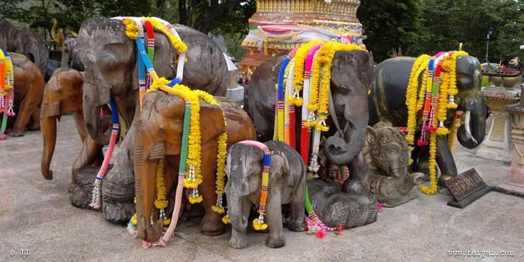 elephants at promthep