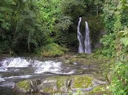 Los bosques tropicales se encuentran cerca del ecuador donde los niveles de temperatura y luz permanecen más o menos constantes durante todo el año.