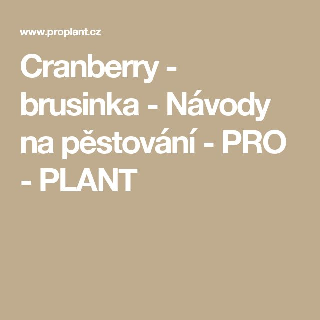 Cranberry - brusinka - Návody na pěstování - PRO - PLANT