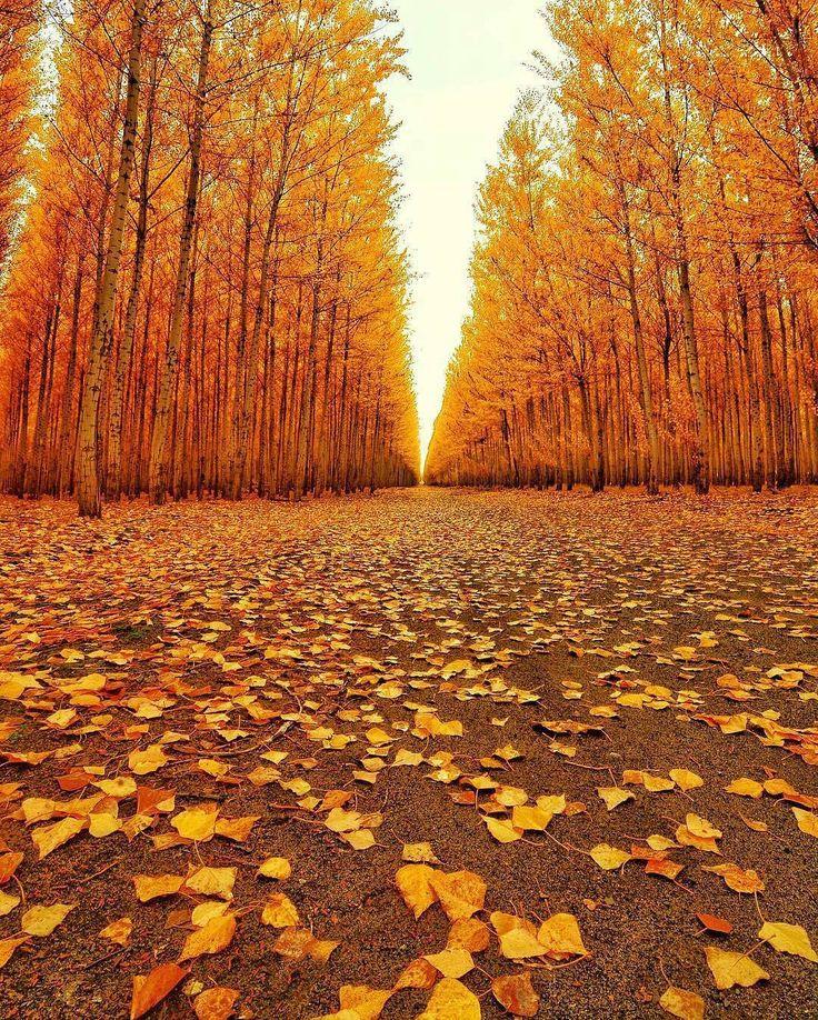 Boardman, Oregon- Photo by: @cbezerraphotos