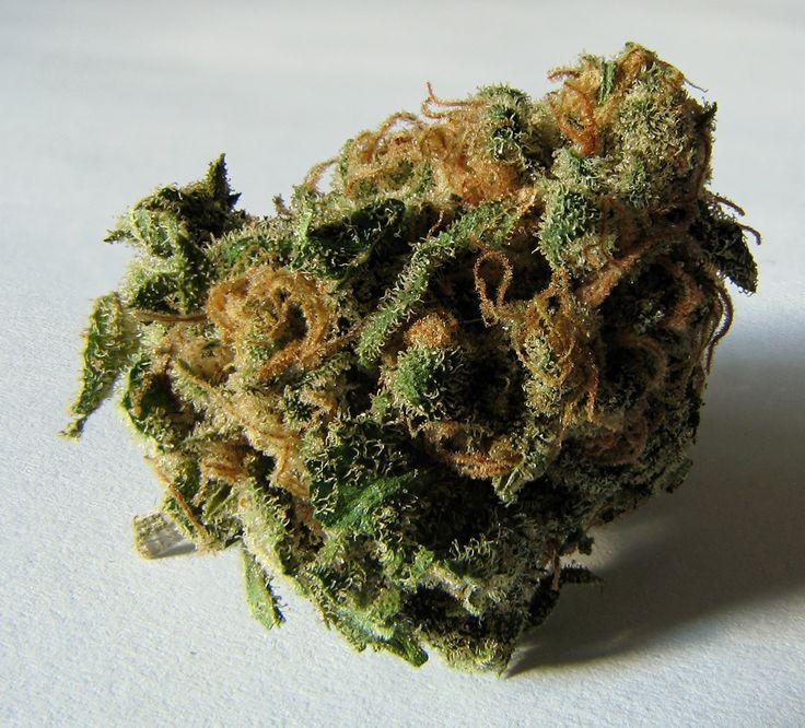 cannabis growing http://www.growingmarijuanaebook.com