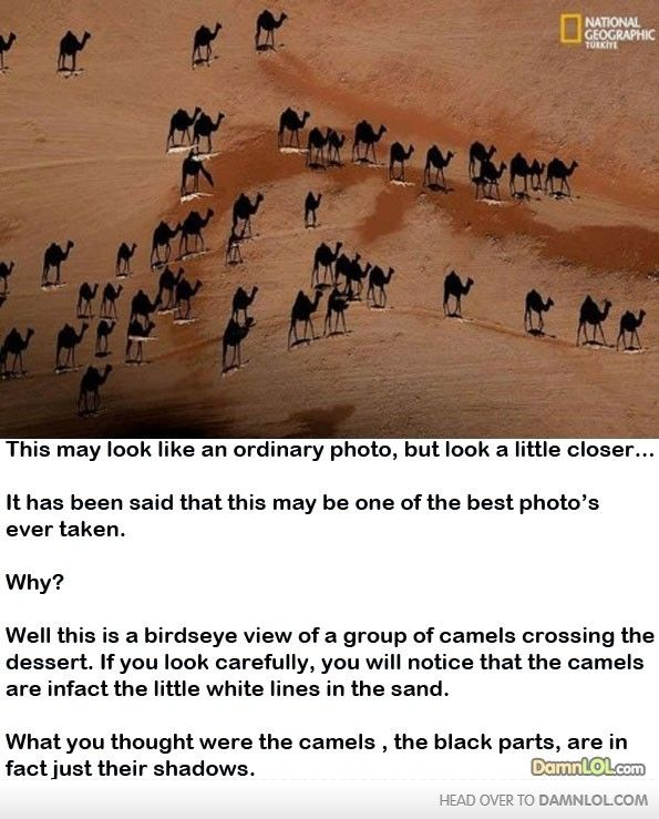 Epic Photo (spelling mistakes in the text. Still amazing, though)