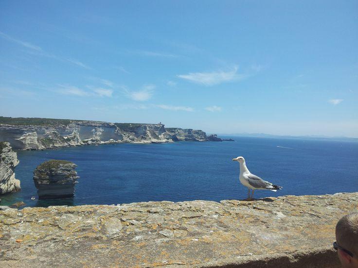 Seagull in Corse, Bonifacio,Les Terrasses d'Aragon