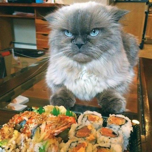 Was soll der Scheiß mit dem Reis? | isnichwahr.de