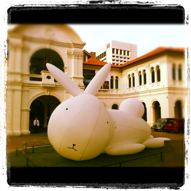 white rabbit - Singapore