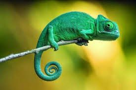 What it would be like to be the class chameleon.
