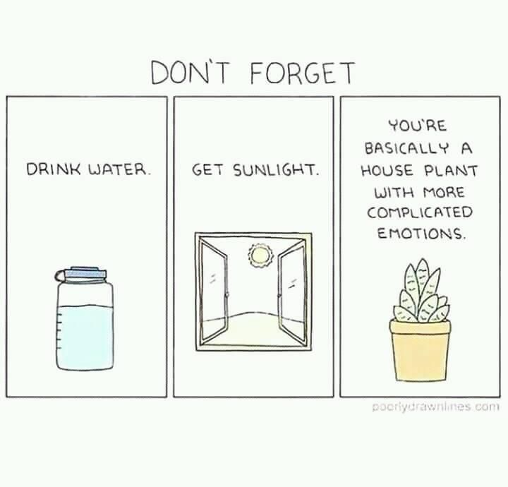 Image result for we're plants need water and sun meme