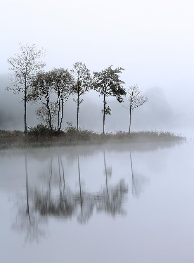 ✯ Trees reflecting on a mist covered Loch Ard - Stirlingshire, Scotland