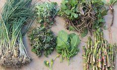 10 Wild Edible Plants For Survival