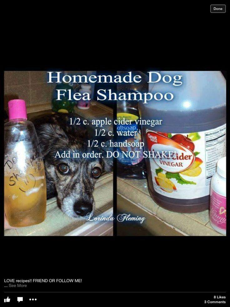 For our loyal friend flea shampoo for dogs flea shampoo