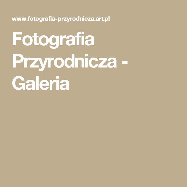 Fotografia Przyrodnicza - Galeria