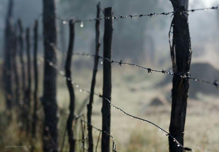 Dew on a fence  Farm Photography Mpumalanga South Africa