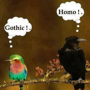 Homophobie chez les oiseaux... (Ah! But this is just the Meet Cute! Soon Our Avian Heroes WILL FALL IN LOVE! ::: cue music :::)
