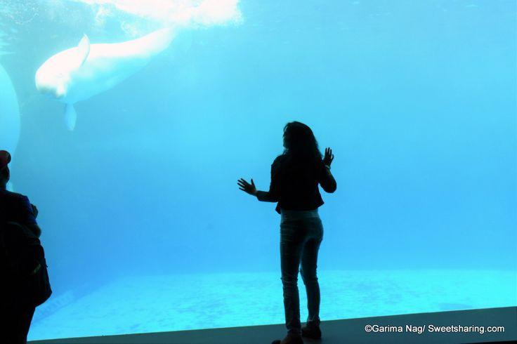 A Trip to Geoje Sea World