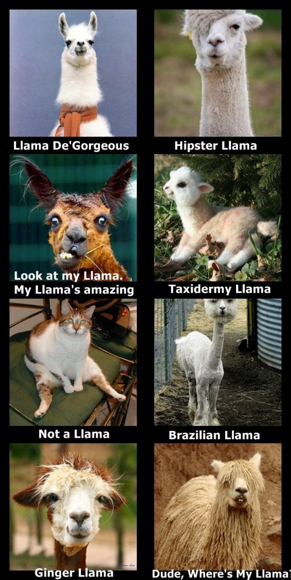 Llamas Nancy I hope you enjoy these as much as me!