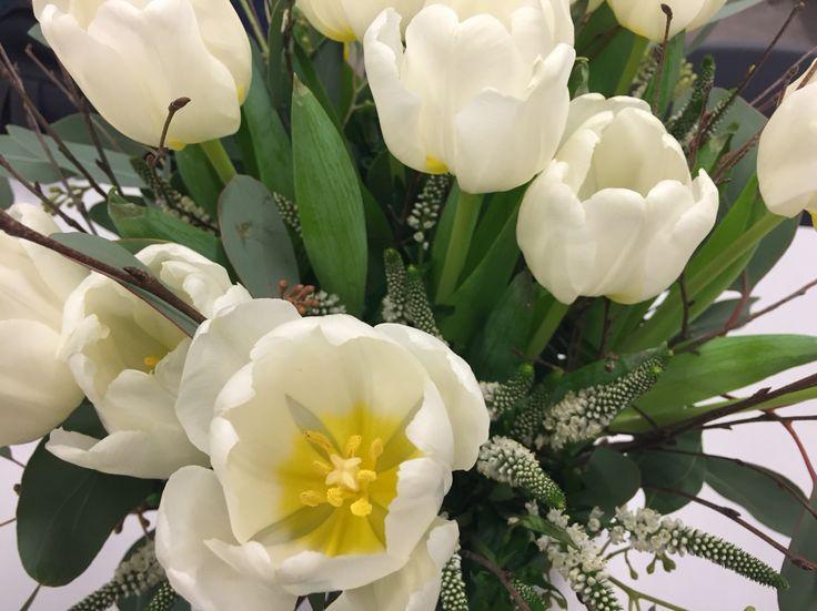 Tulipa!!!
