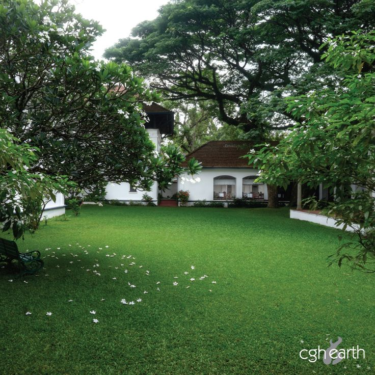 The #BruntonBoatyard has a lush green inner courtyard. There are benches, scented flowering trees and the presence of an ancient rain tree. An oasis of calm amidst the bustle outside.