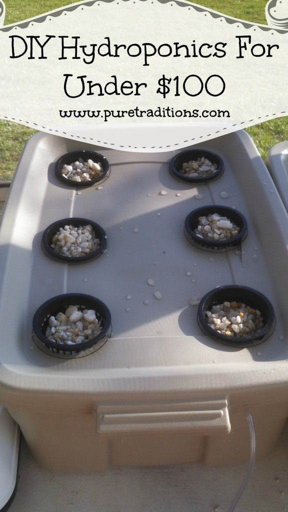DIY Hydroponics For Under $100 - Pure Traditions #garden #hydroponics
