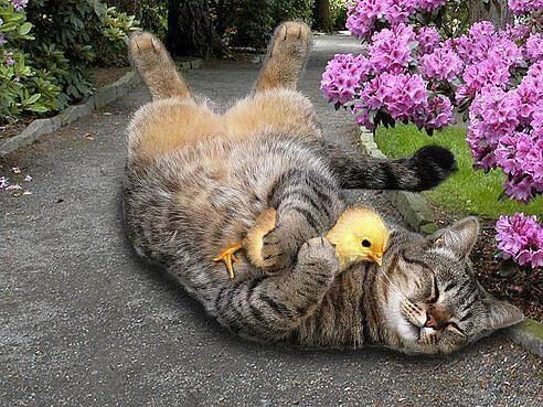 Kitty and friend