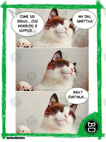 Narcisismo felino - bastardidentro