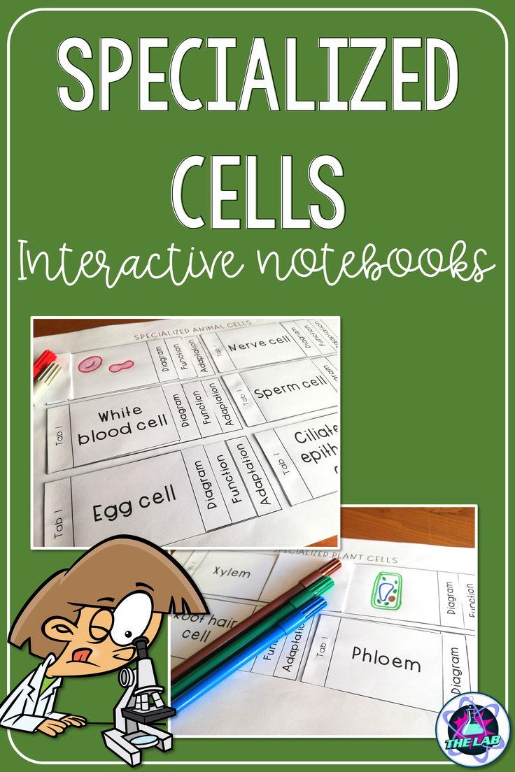 11++ Specialized cells worksheet Online