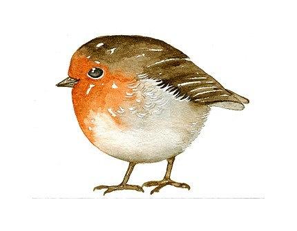 Robin (It's so fat)