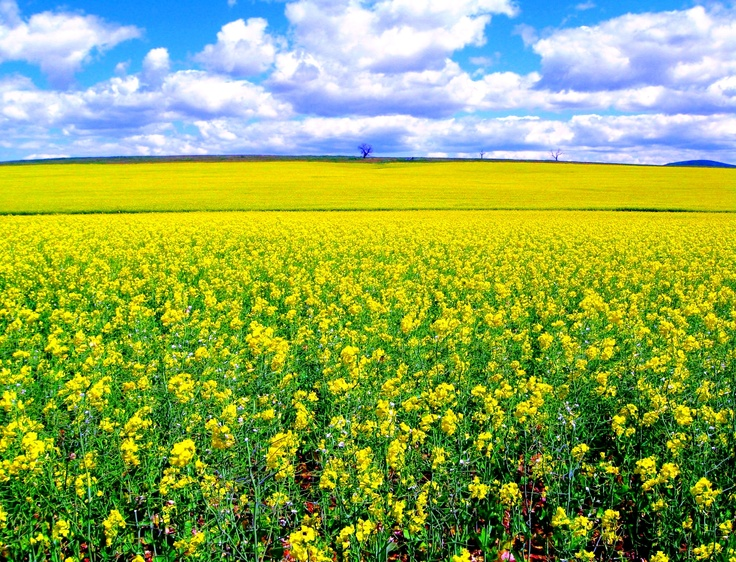 Springtime in South Australia's Clare Valley