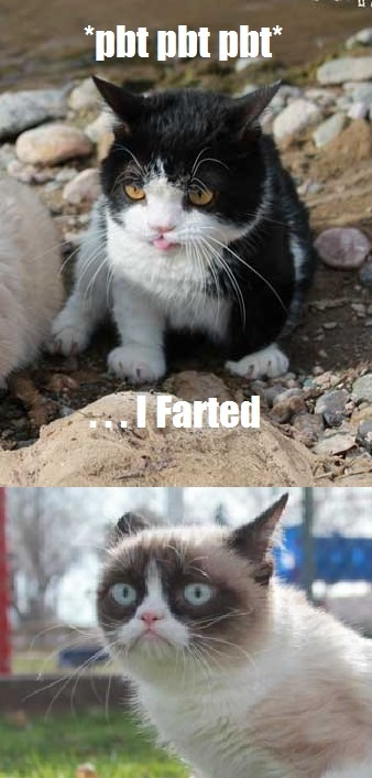 402 best images about tard    on pinterest