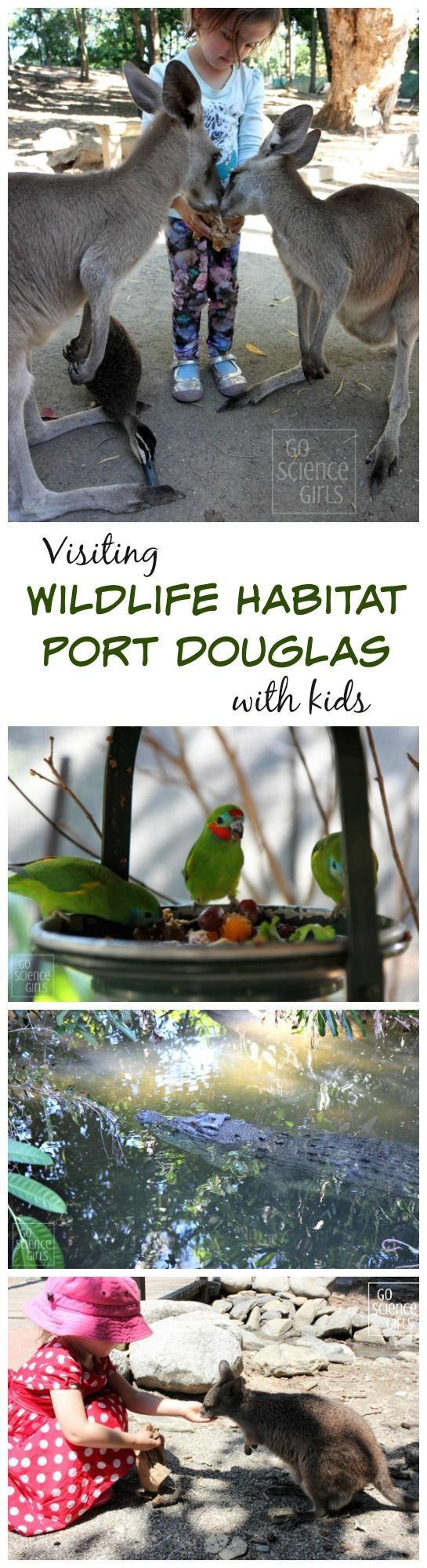 Wildlife Habitat Port Douglas - awesome way to incorporate biology science & nature when travelling with little kids in Australia's tropical north queensland