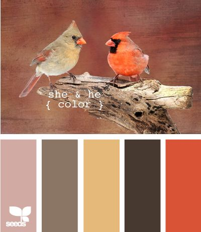 she and he color