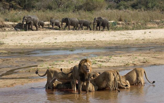 11- A herd of elephants approaches - Gary Hill