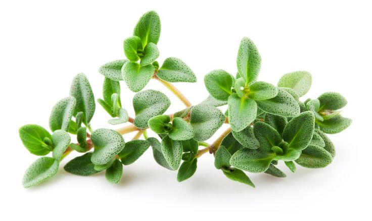 Study Finds Thyme Essential Oil Beats Ibuprofen for Pain Relief | Health Impact News
