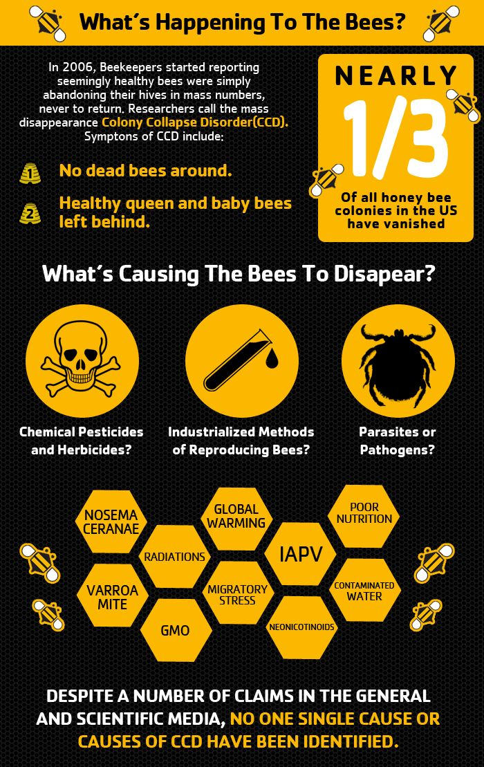 Bees are dying -- what can we do about it?