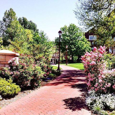 Beautiful summer on University of Denver campus