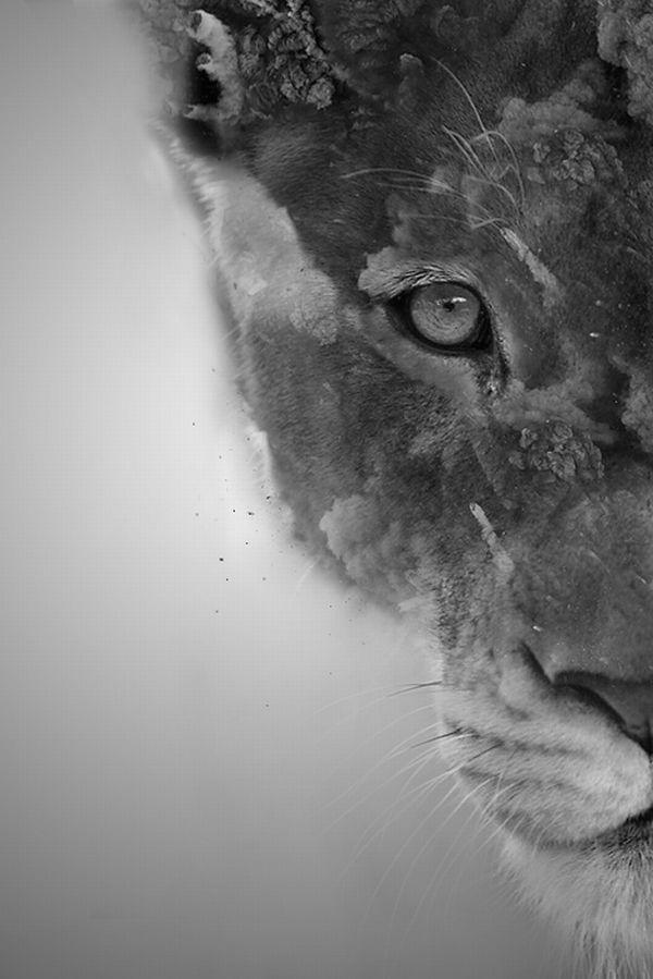 Beautiful wild cat