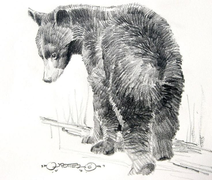 69 best Art images on Pinterest | Draw, Fox and Amazing ...  69 best Art ima...