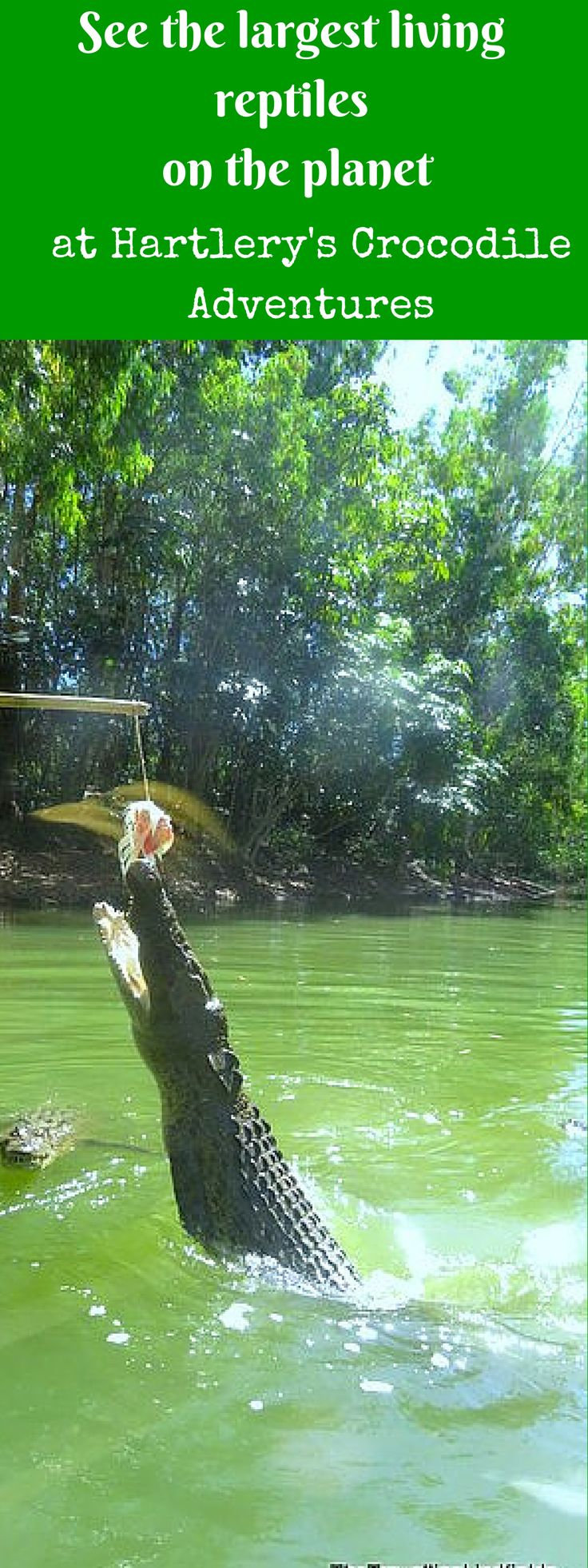 Hartley's Crocodile Adventures - between Cairns and Port Douglas in Far North Queensland http://www.thetravellinglindfields.com/2015/09/hartleys-crocodile-adventures.html