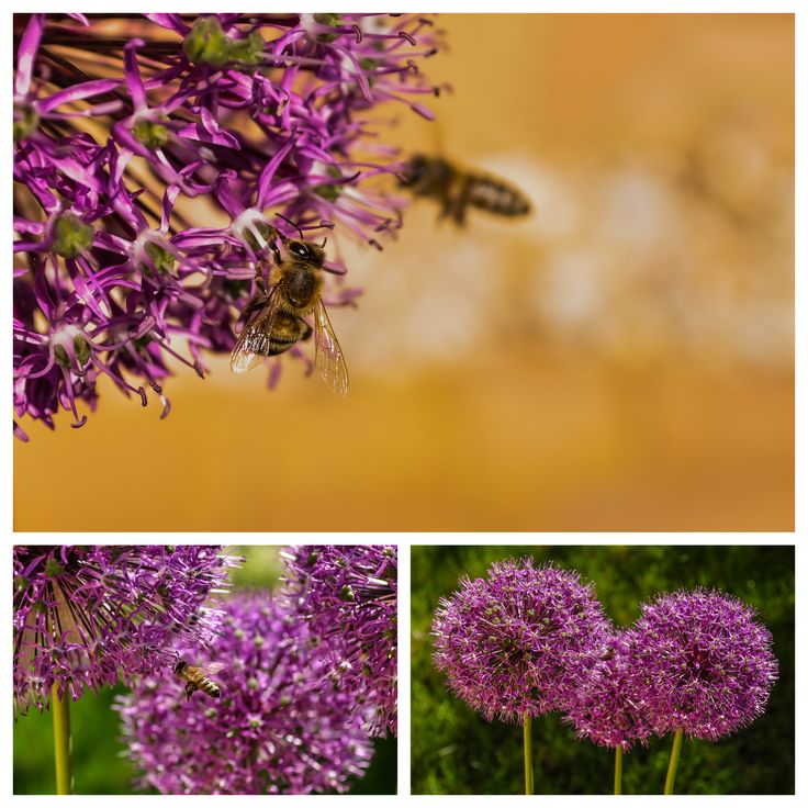 nature Photography | Purple flower and the bee | #photography