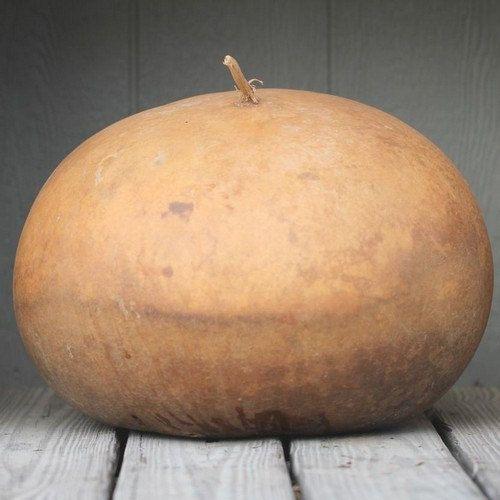 Bushel Gourd Vegetable Seeds Lagenaria by UnderTheSunSeeds on Etsy