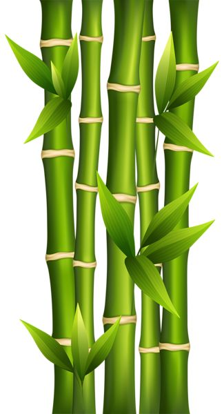 Bamboo PNG Clipart Image