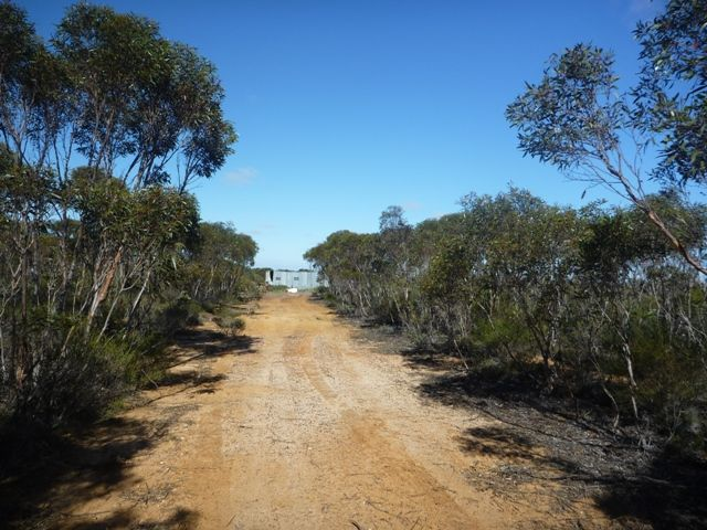 The track to the pig shed
