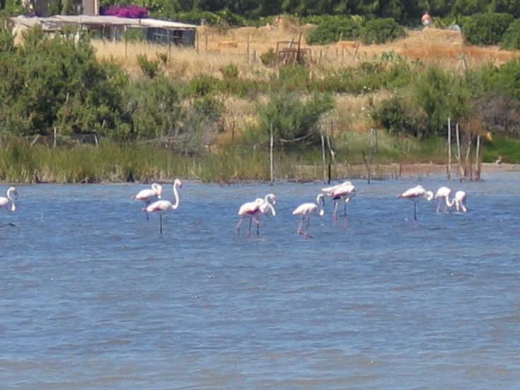 Chia lagoon - with flamingoes