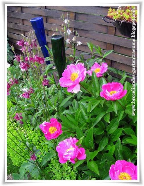 Fresh Broceliandes Gartentr ume ein Cottage Garten im Bergischen Land Mai