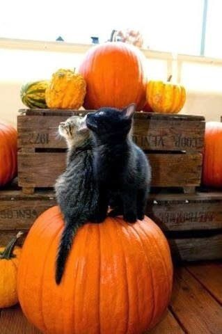 Two of my favorite things in the world, Cats and Autumn!