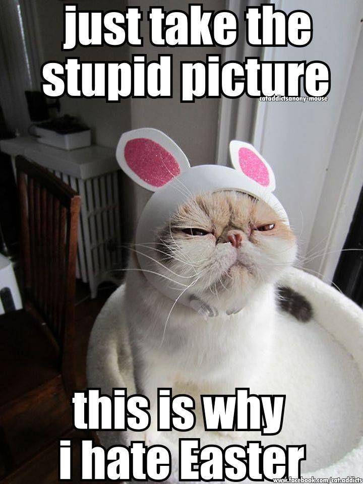 Funny Happy Easter Meme : Best humor images on pinterest