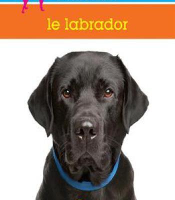 Le Labrador PDF
