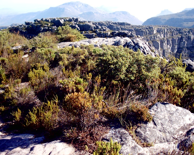 The Table Mountain National Park stretches from Signal Hill in the North to Cape Point in the South encompassing the incredibly scenic Table Mountain. Recognised globally for its extraordinarily rich, diverse and unique fauna and flora, the park is also a Natural World Heritage site and a true South African jewel.