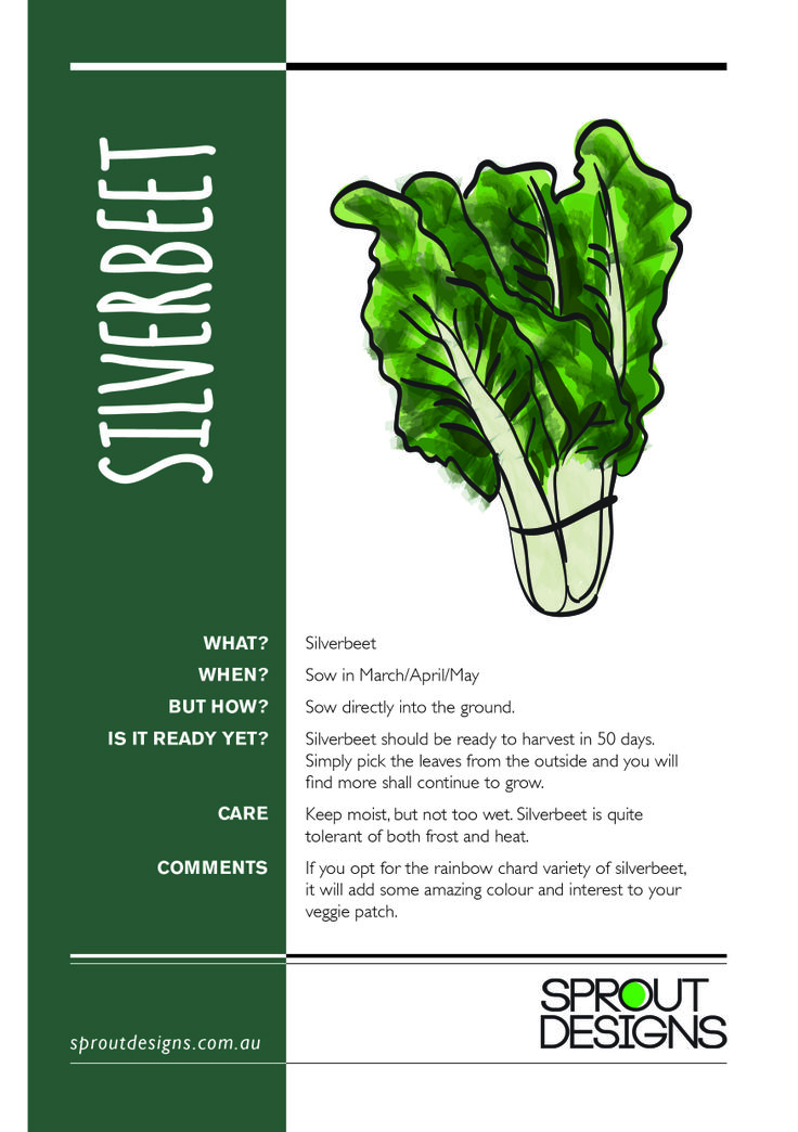 How to grow Silverbeet!
