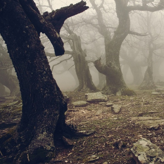 mystical.Inspiration, Nature, Forests Ii, Hallows Eve, Sleepy Hollow, Trees, Places, Happy Haunted, Into The Wood