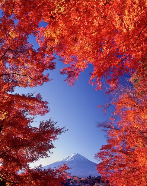 Mount Fuji wrapped in autumn leaves, Fujikawaguchiko, Yamanashi, Japan